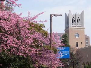 早稲田に春の知らせが…
