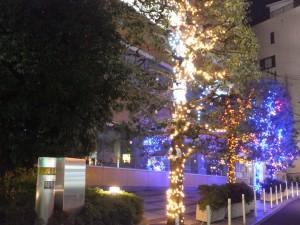 クリスマスイルミネーション(早稲田大学22号館前)