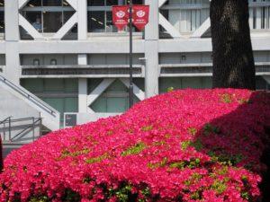 理工キャンパス(早稲田大学)