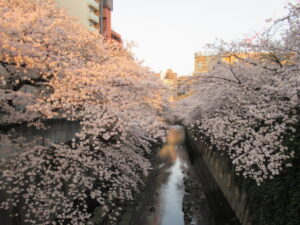マリモで食事をあとは、神田川によく行きました。