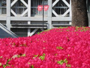 早稲田大学理工キャンパスの花壇